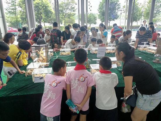 """一场名为""""神奇的生物多样性——甲壳虫""""微展在中国杭州低碳科技馆一楼开展。"""