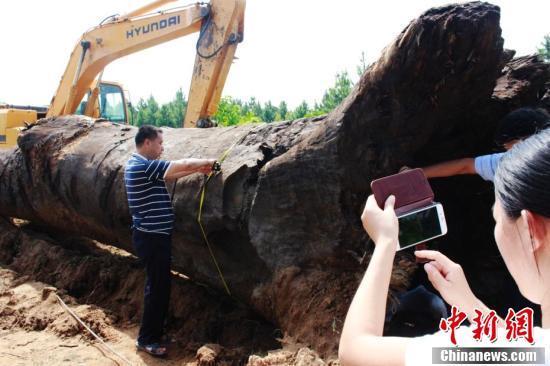 巨大的阴沉木。