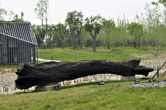 乌木是不可再生资源,开发量越来越少,一些天然造型的乌木艺术品有一定的收藏价值!