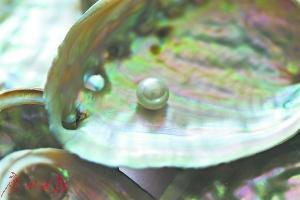最早的人工珍珠出自宋代