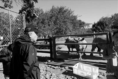 马未都在非洲探访犀牛孤儿