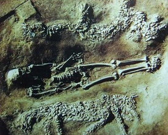 濮阳西水坡遗址出土的蚌塑龙。人骨上面的堆塑为龙,下面为虎。