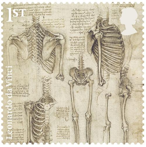 骨骼(1510-1511)