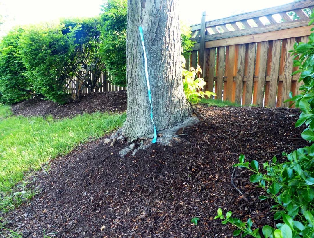 锯末覆盖裸露土地防止扬尘——美国洛杉矶