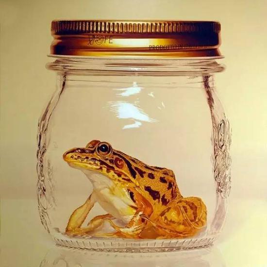 被放置在玻璃罐中的青蛙