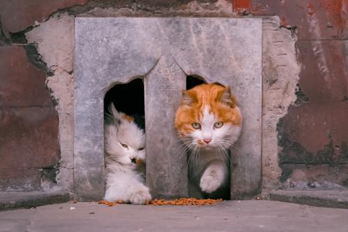 在故宫拍到的两只猫。受访者供图