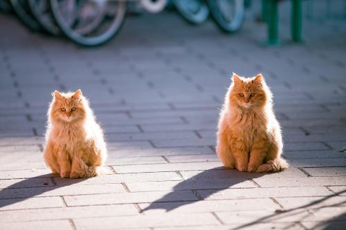 一大一小两只猫,如同复制粘贴。受访者供图