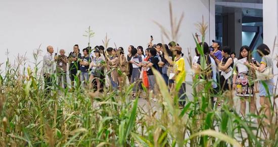 李山导览(涂抹-2)玉米(生命体)展示现场,详解同上