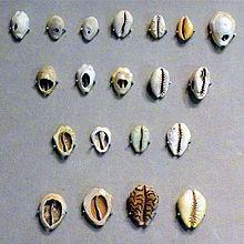 世界上最早的货币竟然是贝壳
