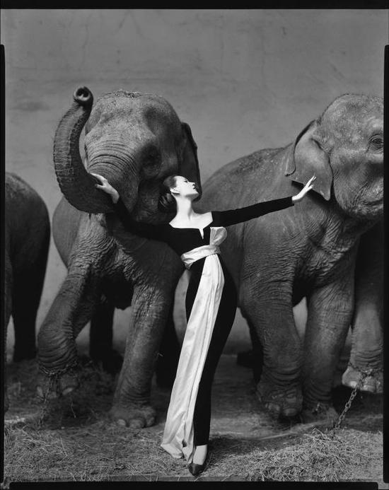 理查德·阿维顿(1923–2004),朵薇玛与大象共舞,1955