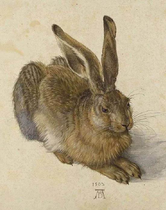丢勒 《野兔》,水彩,1502年