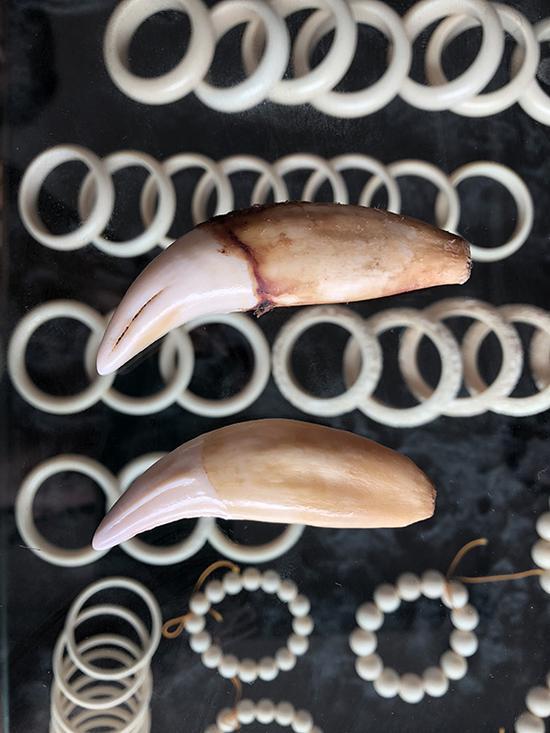 勐拉,一中国店家陈列柜中所展示的虎骨和象牙饰品 。
