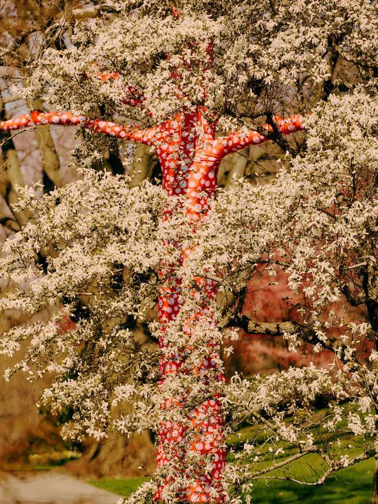 《爬上树的波点》(Ascension of Polka Dots on the Trees)