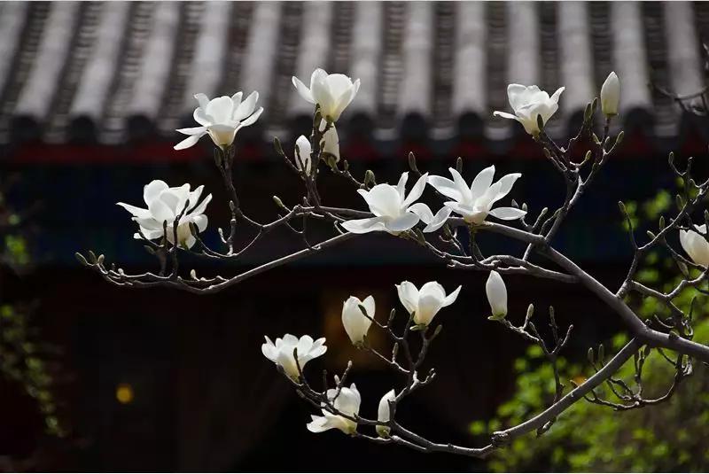 古刹禅茶——大觉寺