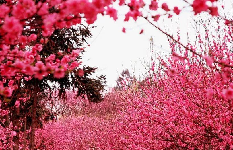 《开元天宝遗事》中,还提到一种非常雅致的春日游戏——斗花草。