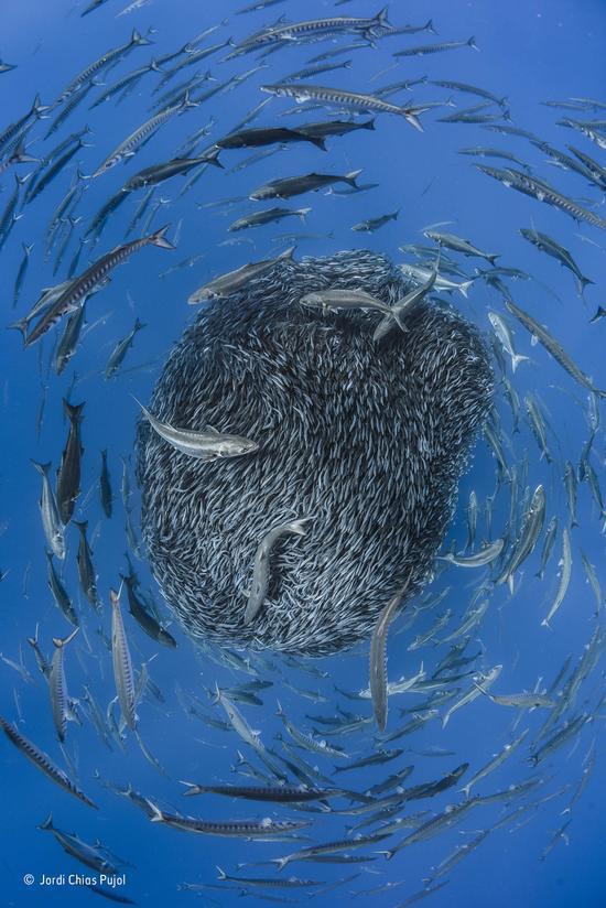 《生命之轮》(环境-水下世界提名作品)(西班牙)霍迪?恰斯?普霍尔 摄影