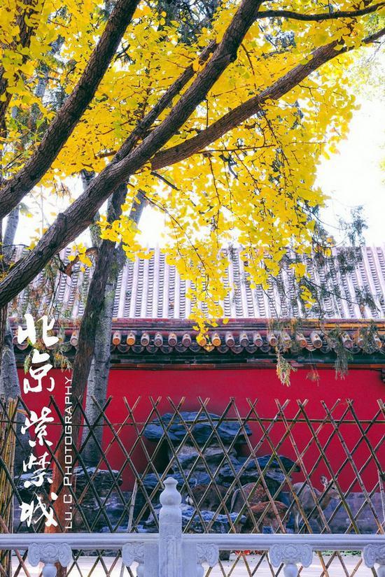 慈宁宫花园