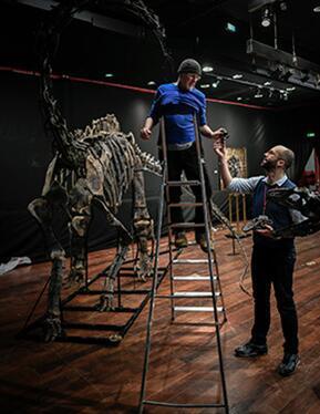 图为 2018 年 4 月 7 日拍摄的资料图片,显示了一位意大利科学顾问组装梁龙骨头化石。图片来源:法新社/史蒂芬?德?萨库丁。