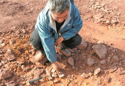 赵灿辉在三水盆地一处工地发现恐龙蛋化石。