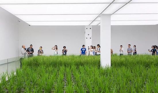 李山导览《涂抹-1》水稻(生命体)展示现场,详解同上