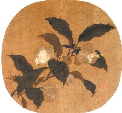 古代画家笔下的亚洲棉。