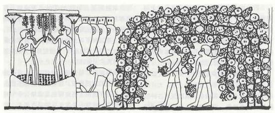 古埃及壁画 约公元前1400年 葡萄酒的生产展示