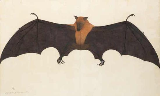 印度插画明亮的果蝠松鼠