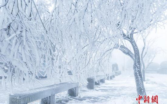江西庐山现雨凇景观 银枝玉叶如琉璃世界
