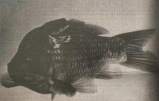 生物艺术方案《阅读》 李山 | Li Shan 1998年2月 纽约