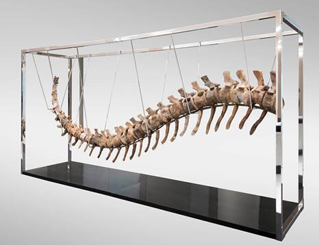 摩洛哥追查墨西哥拍卖会成交的恐龙遗骨化石
