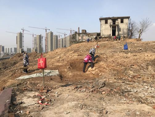 茗山挖掘现场,考古队员围绕着原萧山收容审查所的房子挖掘古墓。