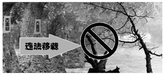 制图/高岳