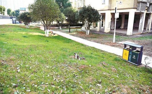 图为:小区不再脏乱差,变得草青树绿路整洁