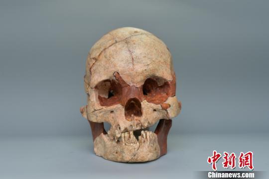 图为人类头骨化石 钟欣 摄