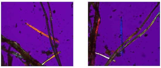 偏光显微镜下的麻纤维