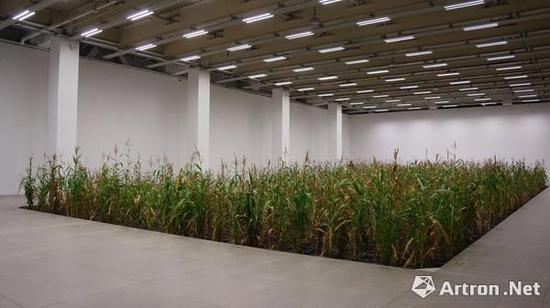 《涂抹- 2》,李山,2017,生命体(玉米)