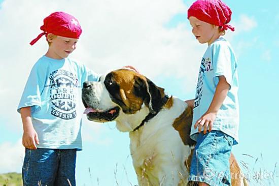 圣伯纳犬深受孩子们喜爱
