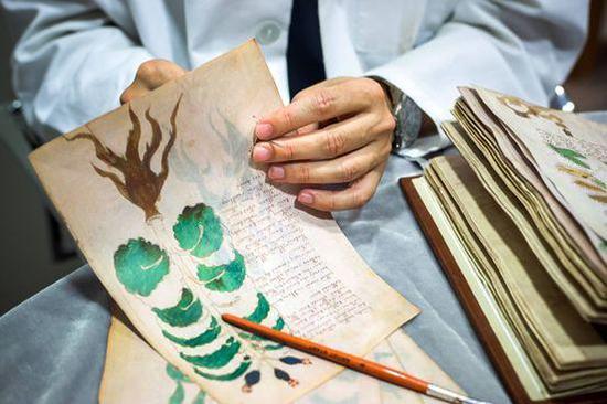 ▲一页的伏尼契临摹,手稿中许多植物插图。图片来源:Getty Images