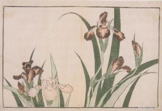 """葛饰北斎""""北斎写真画谱""""、1814、墨摺、淡彩摺、22.7 x 17cm、クラクフ国立博物馆、p。 168"""