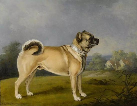 油画中的巴哥犬