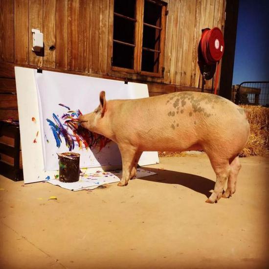 2016年,原本只是一头很普通的猪被一位名叫Joanne Lefson的爱心大姐带走了。