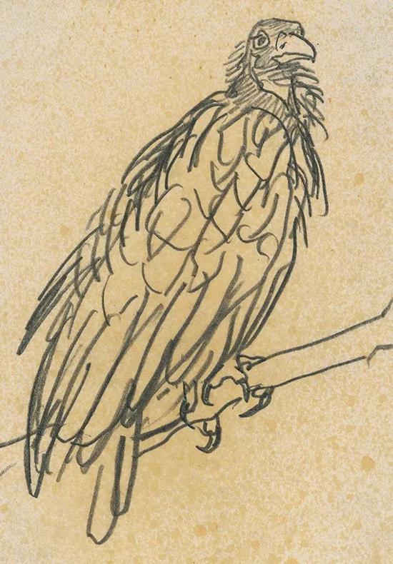 山鹰 1954年 纸本铅笔 17.4×12cm