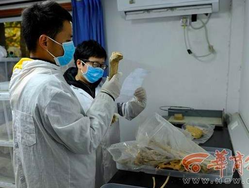 西北大学收藏5000多具古代人骨标本 或破秦人谜题