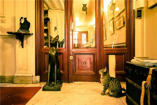 猫咪博物馆