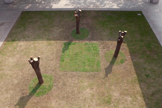 生长计划 柳树树干 可变尺寸 2018