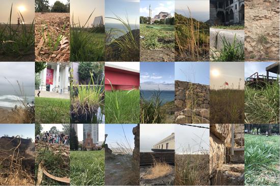 草·影像 影像 3分钟 2018