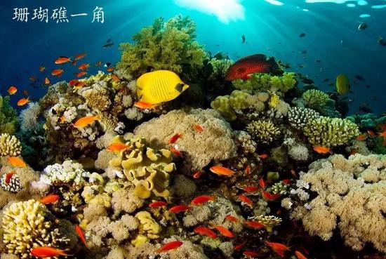 珊瑚礁一角