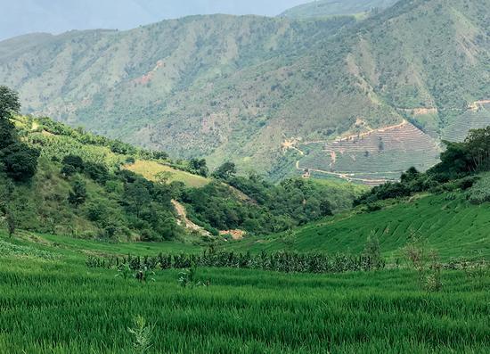 这里是美丽的哀牢山脉,其中元江县啥苦村一带的梯田中蕴藏着中国最美大红宝石。