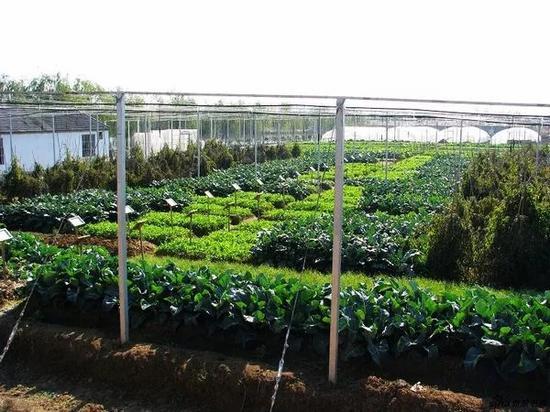南京万成生态园的绿色有机蔬菜