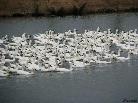南京万成生态园的生态养殖